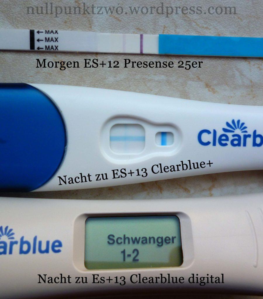 Schwangerschaftstests an ES+12/ ES+13