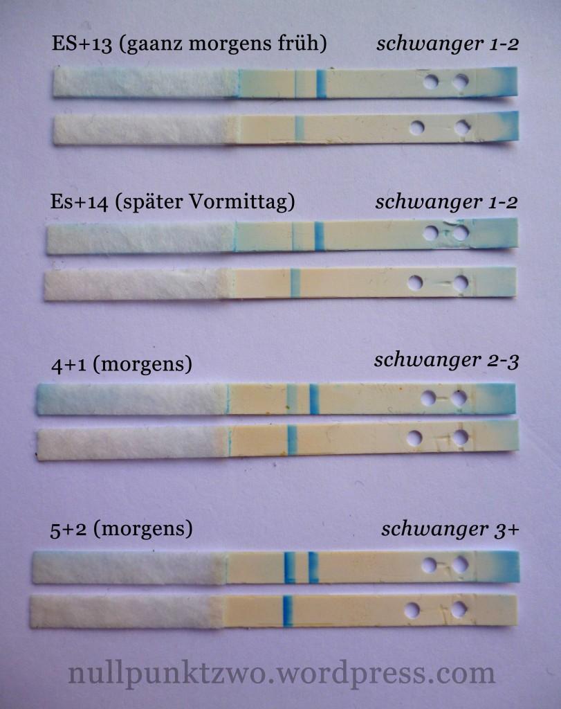Clearblue digital ES+13 bis SSW 5+2