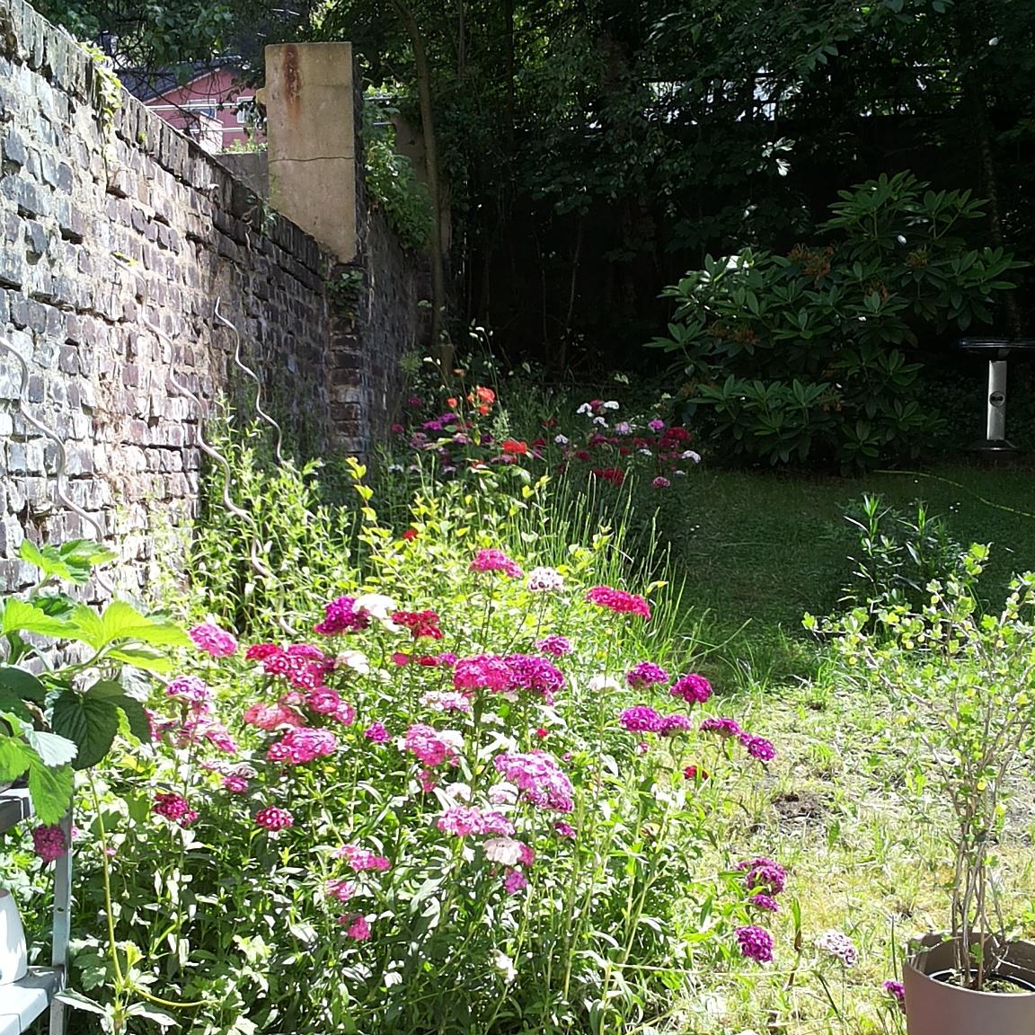 Garten Juni 2014