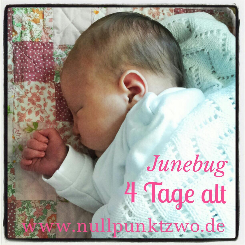 Junebug 4 Tage