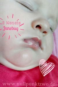 Junebug 3 Monate