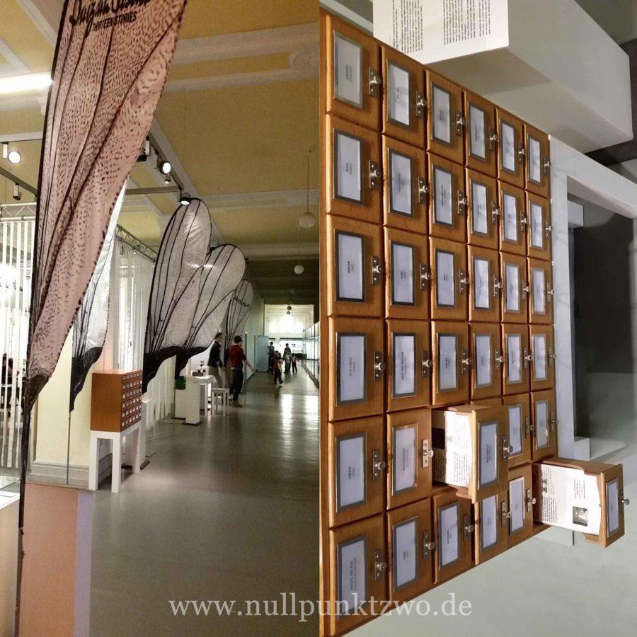 NaturkundemuseumFliegen