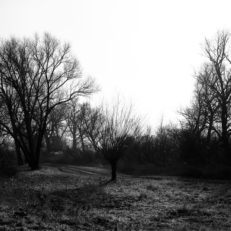 05-Winterhimmel
