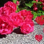 #wieallesbegann – Meine kleine Blogparade ausgewertet