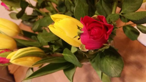Valentinsblumen
