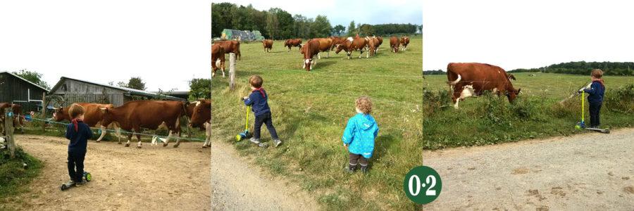 Bauernhofurlaub mit echten Kühen