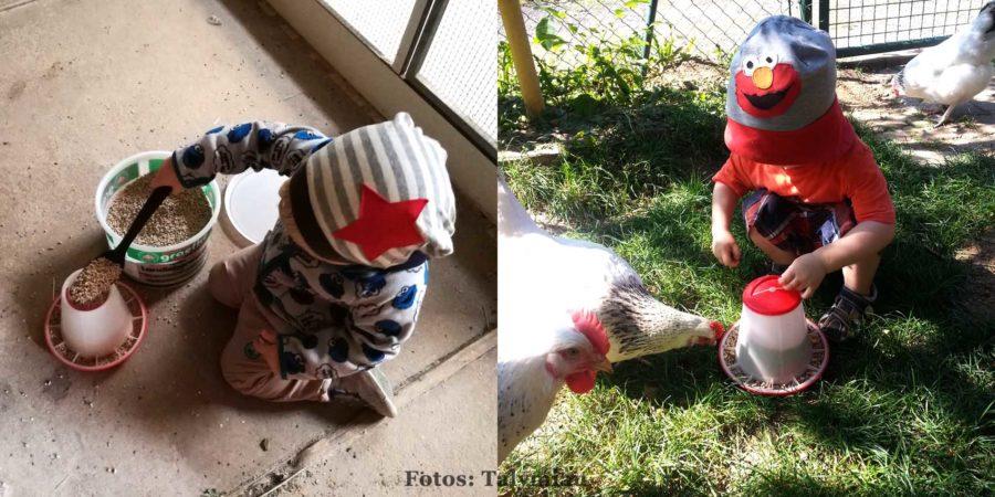 Auch kleine Kinder können schon mithelfen beim Hühnerfutter!