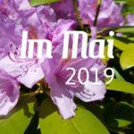 Im letzten Monat | Mai 2019