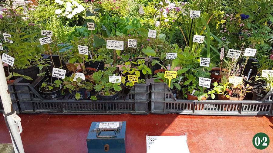 Verkauf von Samen und Stecklingen direkt am Gartenzaun