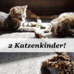 Familienzuwachs: Zwei Kätzchen ziehen ein!