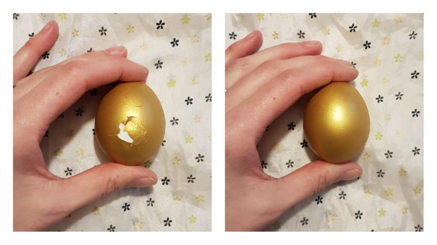 1 Eizelle hat sich befruchten lassen